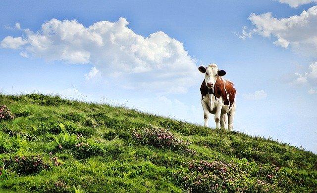 Read more about the article Если твоя корова только в облаках, то молока ты не увидишь (еврейская).