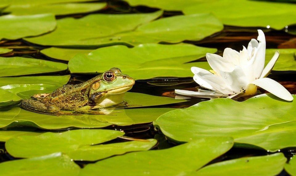 Лягушка – и та хочет, чтобы ее болото было больше всех